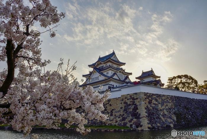 だんじり祭で有名な岸和田市にある岸和田城周辺には、約170本の桜が植樹されています。堂々と佇む天守閣、高い石垣、お濠を取り囲むように植樹されている桜の樹々が見事に調和した風景は、大阪府南部の春を彩る風物詩となっています。