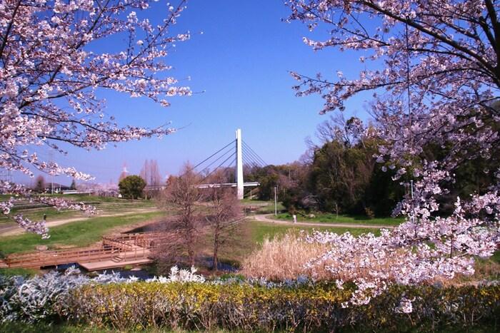 たくさんの野鳥が生息しており、四季折々で美しい花々を咲かせてくれる山田池公園は枚方市にある都市公園です。広大な敷地を誇る公園内には、ソメイヨシノを中心に約10種類以上の桜が植樹されています。