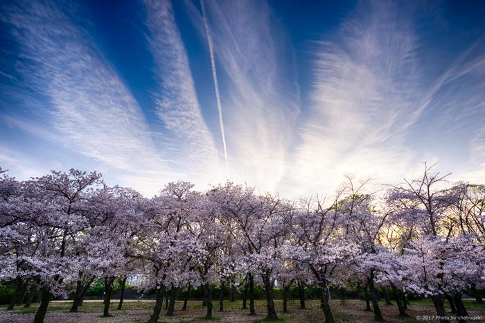 春爛漫とした陽気に包まれながら絶景を楽しもう♪桜の名所10選【大阪府編】