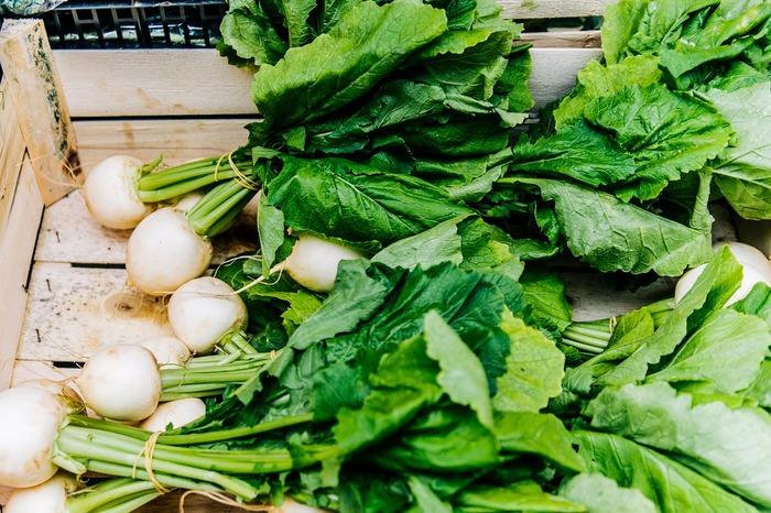 冬野菜としておなじみのカブも家庭菜園で育てられます。小ぶりなサイズの小カブやサラダカブならプランターで育てることも可能です。ビニールトンネルで覆うなど、防寒対策を忘れずにしてくださいね。
