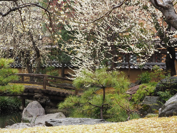 境内には白梅を中心として約300本の梅が植樹されています。梅が見ごろを迎える時季になると「湯島天神梅まつり」が開催され、大勢の人々で賑わいます。