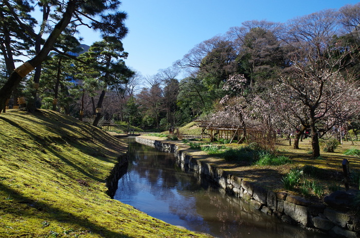 小石川後楽園は、江戸時代初期に水戸徳川家の屋敷の庭園として造られた大名庭園で国の特別史跡、特別名勝に指定されています。約7万平方メートルの敷地を誇る庭園内には四季折々で美しい花々が開花し、毎年初春になると梅が見ごろを迎えます。