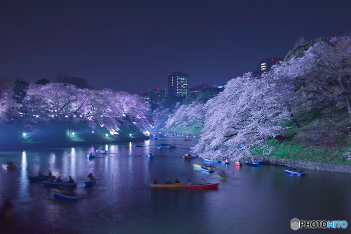 千鳥ヶ淵緑道では、夜間のライトアップが施されます。ボートは夜間も営業しているため、お堀の上から、光り輝く夜桜を眺めるというロマンチックなお花見を楽しむことができます。