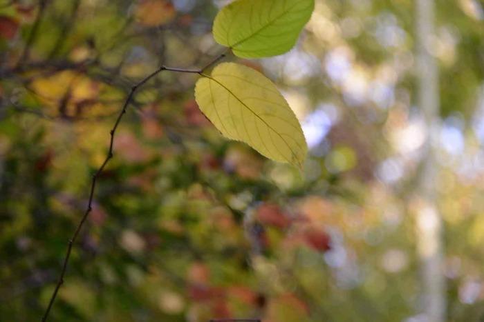 また、四方を山々に囲まれた「笠間」は、古くから栄えつつも、今もなお自然豊か。当地では、恵まれた自然環境を活かした農畜産業が盛んです。【11月上旬の笠間市福原】