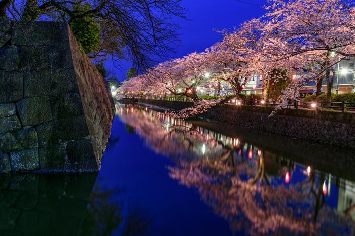 小田原城址公園では、桜が見ごろを迎える時季になると夜間のライトアップが施されます。藍色の夜空、無数に灯されたぼんぼり、光を浴びて淡ピンク色に輝く桜、桜の樹々を鏡のように映し出すお堀が融和した景色は幻想的で、いつまで眺めていても飽きることはありません。