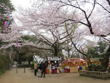 清水公園は、「日本さくら名所100選」に選定されており、千葉県を代表する桜の名所です。公園内には、ソメイヨシノを中心に、2000本の桜が植樹されています。