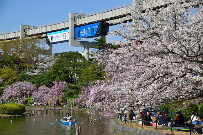 千葉市街地に立地している千葉公園は、約16.1ヘクタールの敷地面積を誇る総合公園で、市民にとって都心のオアシスのような存在として親しまれています。毎年春になるとソメイヨシノを中心に、公園内の桜が見ごろを迎え、たくさんの花見客がこの地を訪れています。