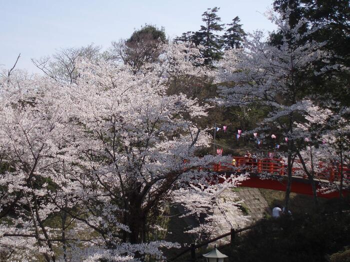 北総エリアにおいて指折りの人気を誇るの桜の名所、小見川城山公園ではソメイヨシノなどの桜約1000本が植樹されています。