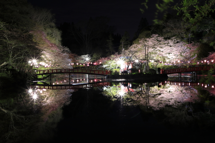 茂原公園では、夜桜鑑賞を楽しむこともできます。無数に灯されたぼんぼり、光を浴びて淡ピンク色に輝く桜の樹々、それらを鏡のように映し出す水面が織りなす景色は絶景そのものです。