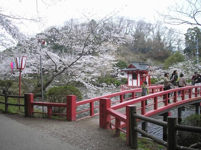 茂原公園は、標高20メートルから50メートルの起伏を活かして造られた都市公園です。ここは、「日本さくら名所100選」に選定されているほか、「房総の魅力500選」の一つにも数えられており、桜の時季になると大勢の花見客で賑わいます。