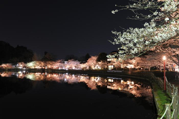 八鶴湖は、千葉県有数の夜桜の名所として知られています。夜になると湖畔の桜はライトアップが施され、日中とは異なる風情を見せてくれます。