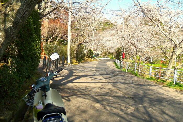 八鶴湖は、徳川家康が東金御殿を建築したときに造られた人造湖です。湖の周囲には約1000本の桜が植樹されており、毎年春になると「東金桜まつり」が開催されます。