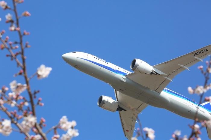 成田市さくらの山は、成田空港のすぐ近くに位置しているため、桜を鑑賞しながら、大迫力で飛行機の発着陸を見ることができます。