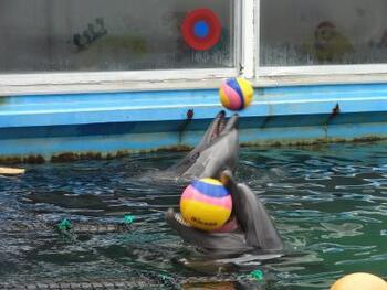 「生き物たちとの触れ合い方が半端じゃない」と、マニアの中でも有名なこちらの水族館。イルカプールの前では、イルカ自ら「遊ぼう!」とボールを誘い投げてきて、キャッチボールがはじまることもあります。