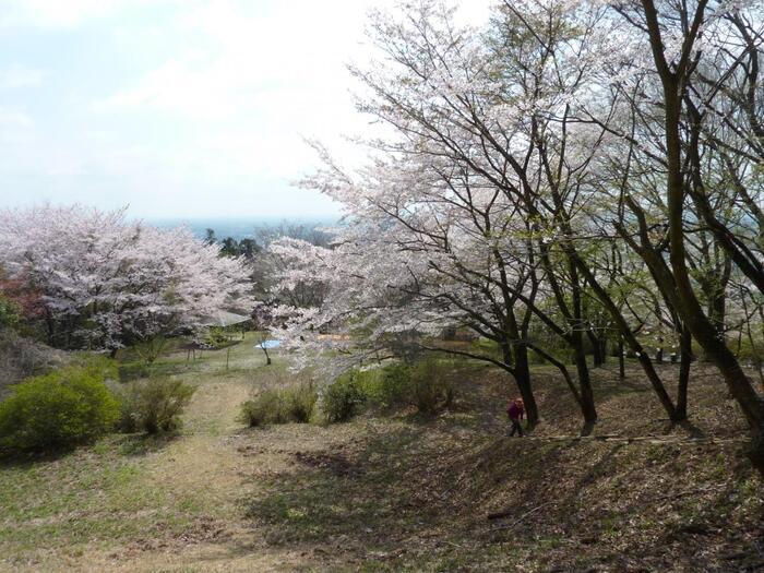 標高305m程の「愛宕山」は、吾国山(わがくにさん)を含め「吾国愛宕県立自然公園」であり、「吾国愛宕山ハイキングコース」は、茨城百景の一つ。自然と親しむのにお勧めのスポットです。  【愛宕山は、桜の名所と名高く、例年4月上旬頃から4月下旬頃まで、約20種類2,000本の桜が、麓から山頂へと段階的に咲き継いでいく。標高差があるため、長い期間桜が楽しめる。】