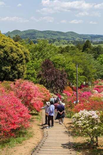 【市内が一望できる小高い山に整備された「笠間つつじ公園」は、麓から山頂まで、緩やかな散策路が整備されて、ハイキングが楽しめる。例年4月中旬から5月上旬まで、約8500株のツツジが山肌に咲き誇り、濃淡様々のツツジで彩られ、開花期間中は、祭りも開催。  他の季節でも、山頂の展望台からは笠間市内のどかな田園風景を一望出来、夜景も見事である。笠間稲荷神社から、展望台までは歩いて30分程度。途中には、古刹の「佐白山 正福寺」、「笠間城主下屋敷跡」坂本九の「九ちゃんの家」等の名所がある。】
