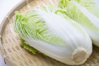 白菜を長持ちさせたいなら、カットしたものよりも丸ごと買いのほうが痛みにくくておすすめ。上手に保存すれば3~4週間ほど日持ちがききます。切った断面から傷んでくるので、使う際は外側の葉から1枚づつはがして、根元でちぎります。そうすると、白菜ひとつを長く無駄なく使い切れます。