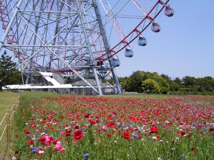 東京都江戸川区にある広大な公園です。JR京葉線の駅名にもなっており、東京ディズニーランドからも見える「ダイヤと花の大観覧車」がシンボルとなっています。約81万平米にもなる敷地の中には大きく4つのゾーンに分かれています。