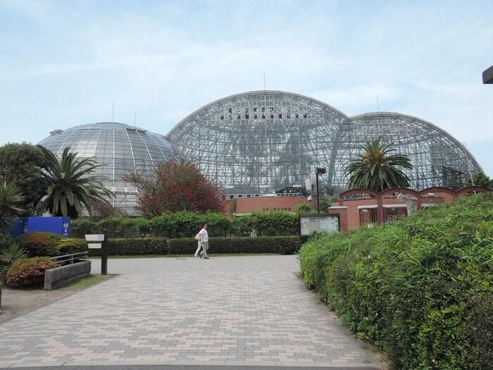 ドーム型の植物館には熱帯・亜熱帯の花を中心に様々な木々や花を観賞することができます。敷地内にはカフェもあり、ガパオライスやロコモコなど植物の雰囲気に合う食事もいただけます。