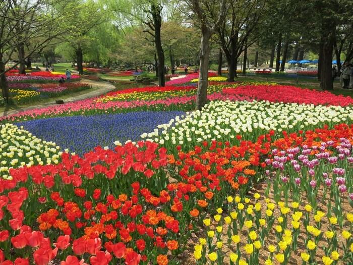 東京都の立川市・昭島市に跨って広がる大変広大な公園です。公園内には自然溢れる緑が広がっており、一年中旬の花々や木々の色づきを楽しむことが出来ます。