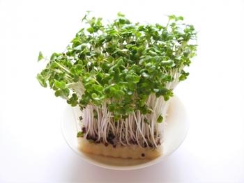 ねぎやブロッコリースプラウト、三つ葉、豆苗や海苔などお好みのものを。窓辺で育てている貝割れ大根もいいですね! 最後に七味唐辛子や粉山椒を振りかけるとおとな向けの風味に。