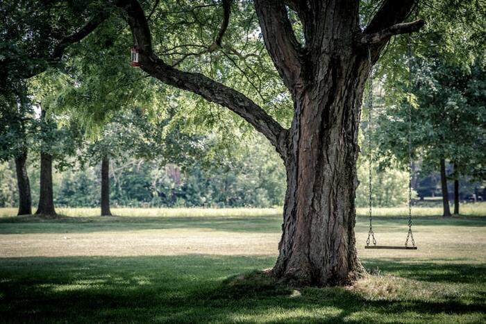 「静寂」の中で過ごすことには、以上のようなメリットがあります。鳥のさえずりや木の葉を踏む音しか聞こえない公園を毎日のように散策できたら、体にも脳にも嬉しい効果がありそうですよね。