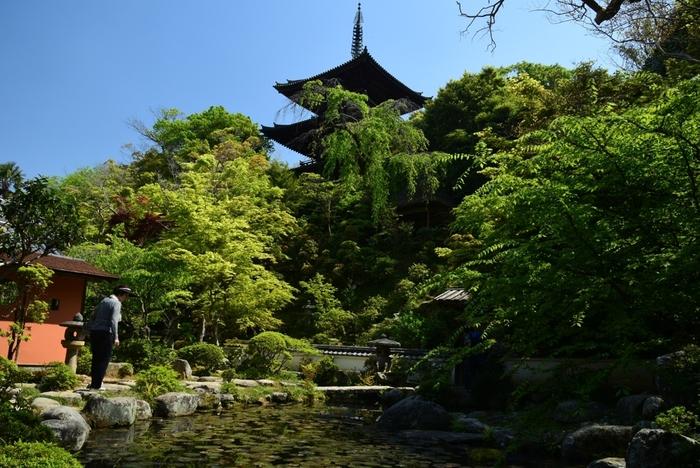 當麻寺塔頭・中之坊には、国の史跡・名称に指定されている美しい庭園があります。中之坊を訪れた際には、牡丹園だけでなく、ぜひ庭園も見学されることをおすすめします。