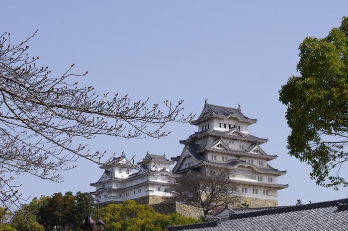 姫路城内にある千姫ぼたん園は、徳川幕府第2代将軍・徳川秀忠の娘で、姫路城に居城していた本多忠刻の妻である千姫のために、義父である本多忠政が、姫路城三の丸の高台に造園した牡丹園です。