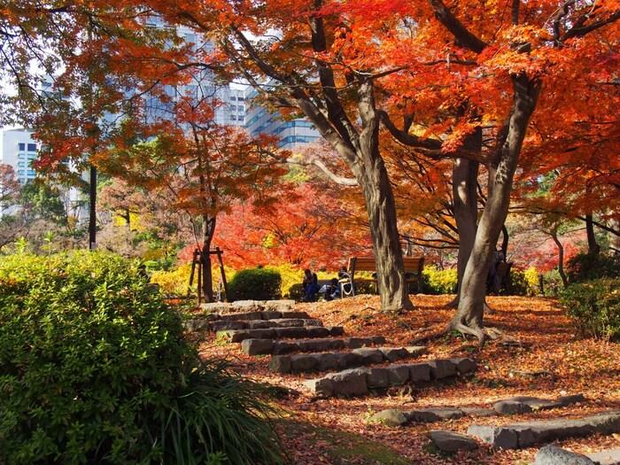 開園してから110年以上も経っている歴史ある公園です。銀座など都会のすぐ近くにありながらも自然に囲まれた癒しスポットです。春はサクラ、夏はあじさい、秋は紅葉、冬はウメと一年中旬の植物を観察できますよ。