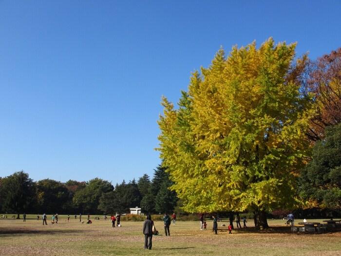 練馬区から板橋区にかけて広がっている広い公園です。広大な芝生地は6ヘクタールにもなり、運動やピクニックなどで自由に楽しむことが出来ます。芝生の周りには大きな木々が植えられています。また、バーベキュー広場や水景施設などもあり、散歩をするだけでもいい運動になりますよ。