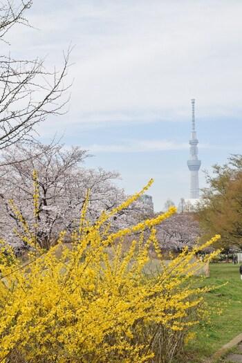 桜の季節には公園内に咲く花々と、背景にスカイツリーが見える景色が楽しめます。時計台の近くにも桜が咲き誇り、素敵な絵を写真に撮ることができます。