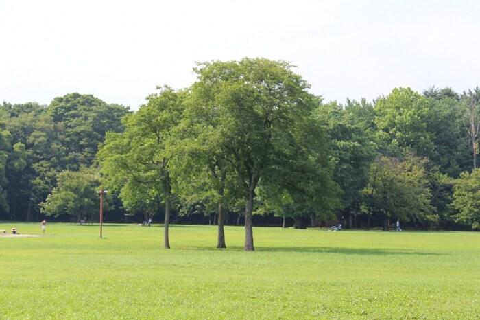 東京都の都立公園です。基本的には小金井市となりますが、敷地の一部は周辺の小平市・西東京市・武蔵野市にも跨っている広大な公園です。ドッグランやバーベキューのできる広場もあり、週末には賑わいをみせる人気のスポットです。