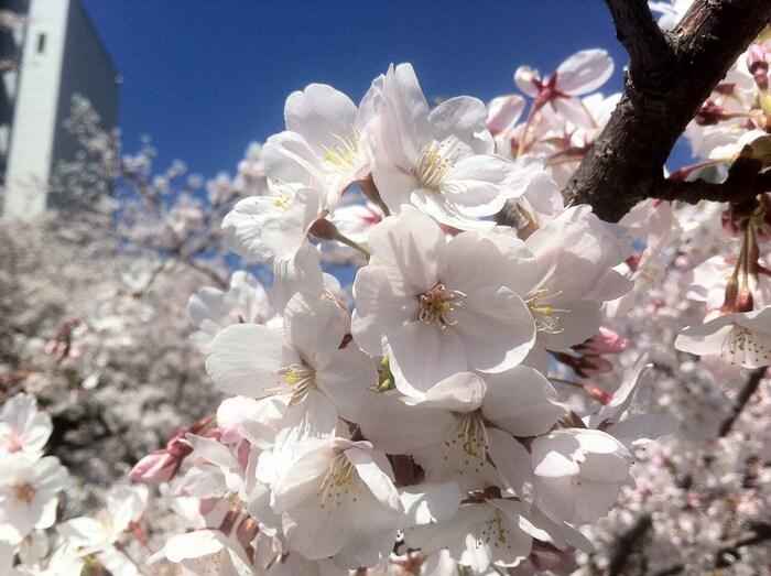 特に小金井公園は桜の名所ともされており、春には1800本の桜が満開を迎えます。「桜の園」と呼ばれるスポットもあり、お花見をする方々が多数訪れます。また、バードサンクチュアリなどもあり、野鳥たちの姿も見ることができますよ。