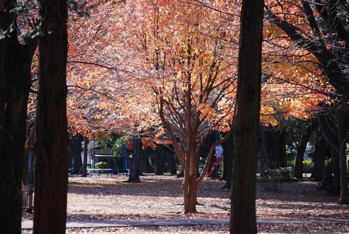 11月下旬から12月中旬にはケヤキ並木が赤赤と色づく姿は絶景です。落ち葉によってまた姿を変えた広場を散歩するのもおすすめですよ。都会にある大人のスポットです。
