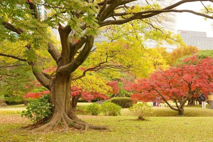 各線の汐留駅から徒歩7分程の場所の歴史あるスポットです。江戸時代につくられた大名庭園で、明治維新には皇室の離宮として使われていました。敷地内には有名な三百年の松や四季の花が植えられた花畑など素敵な景色を楽しめますよ。