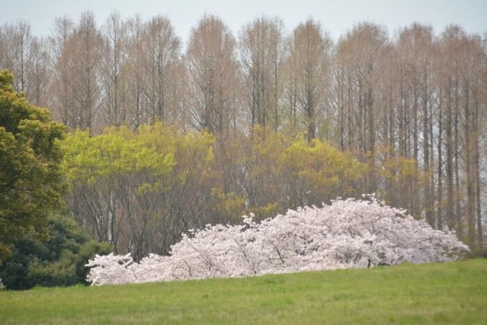東京都葛飾区にある、都内で唯一水郷の景観を持っている公園として人気です。生きている化石と呼ばれる落葉樹のメタセコイアの森があることでも有名です。バーベキュー広場やバードサンクチュアリーもありますよ。