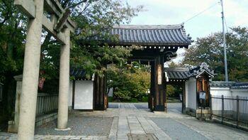 本満寺は、1410年に創建された日蓮宗の仏教寺院です。大きな枝垂れ桜が有名な本満寺ですが、実は、隠れた牡丹の名所でもあるのです。
