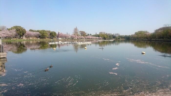 公園の中心には約4ヘクタールにもなる池が広がっており、こちらは全面開放されているため自由に釣りを楽しむことが出来ます。水鳥が優雅に泳いでる姿も見られる癒しスポットです。