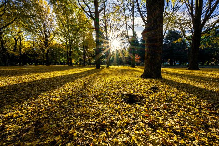 大人も楽しめる都内の公園15選|美しい景色やアクティビティで1日を満喫!