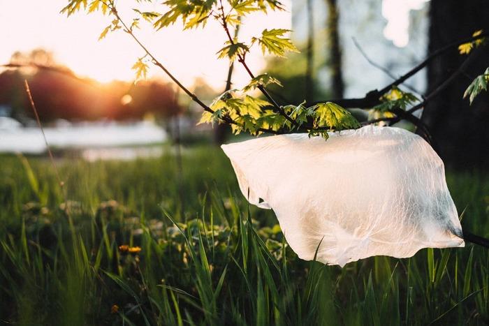 小さなことから始めよう。「プラスチックフリー」な暮らしのヒント