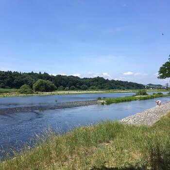 府中には府中の森公園、府中市郷土の森博物館など、公園がたくさんあります。さらに多摩川に面しているので、川沿いを散歩したり、川遊びも楽しめます。ファミリーはもちろん、レジャー好きな人にもおすすめな環境です。