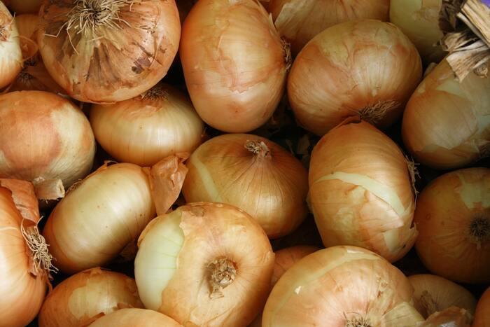 玉ねぎは、涼しく風通しの良い場所で保存します。冷蔵庫の野菜室は湿気が多いので、新聞紙で包むなどして湿気対策をしてください。玉ねぎネットや麻袋に入れて吊るして保存するのもおすすめです。
