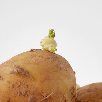 買ってからしばらく置いていると、いつの間にか芽が出てしまう野菜。芽が出てしまったらもう食べられないと思って、捨ててしまっていませんか?