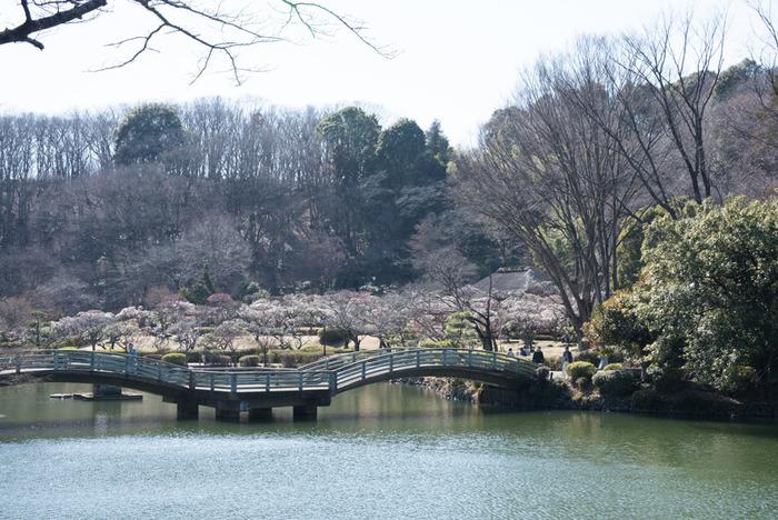 薬師池公園、芹ヶ谷公園、町田リス園など、自然を感じられる施設もたくさん。都心から距離は離れていますが、東京方面以外にも横浜・江ノ島・箱根などにアクセスしやすく、お出かけ好きな家族にはぴったりです。