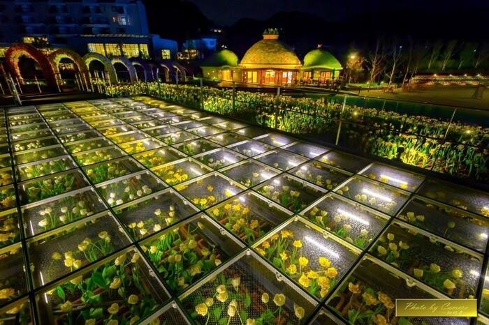 ラグーナテンボスでは夜になると花々のライトアップが施されます。光を浴びて輝くチューリップの花々は日中とは異なる風情を見せてくれます。