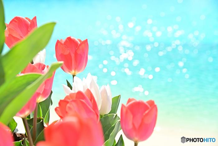 ラグーナテンボスは、テーマパーク「ラグナシア」、ヨットハーバー「ラグナマリーナ」、温浴施設「ラグーナの湯」、宿泊施設などで構成される複合型エンターテイメントパークです。広大な敷地内には、お花畑「フラワーラグーン」があり、毎年春になるとチューリップが開花します。