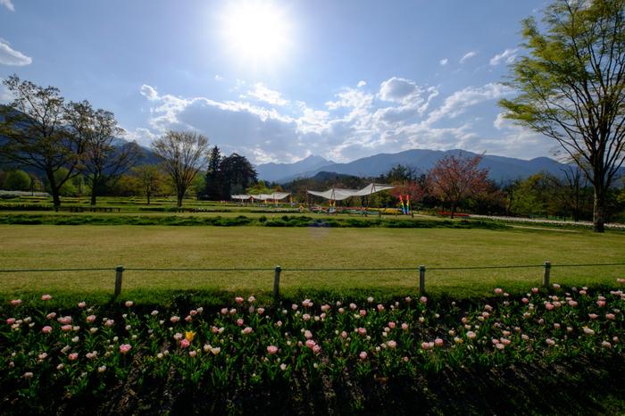 アルプスあづみの公園は、日本を代用する名峰が連なる北アルプス(飛騨山脈)の麓に位置する総面積353ヘクタールの国営公園です。ここでは、北アルプスを背景にチューリップ畑を眺めることができます。