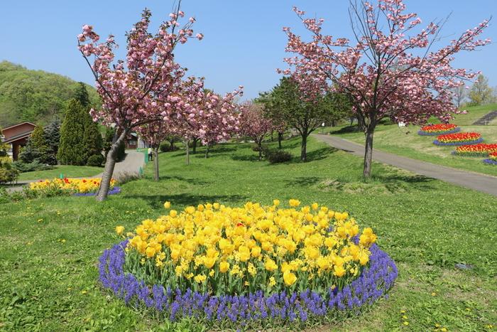 越後丘陵公園内では、チューリップとほかの花の寄せ植えをしている小さな花壇もあり、随所で可愛らしい風景を眺めることができます。
