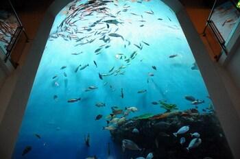 場内は、海の世界を見て・触って・感じることができる、まさに竜宮城。ナポレオンフィッシュや色鮮やかな南の海の魚たちが躍る、高さ8mのクリスタルタワー水槽がお出迎え。