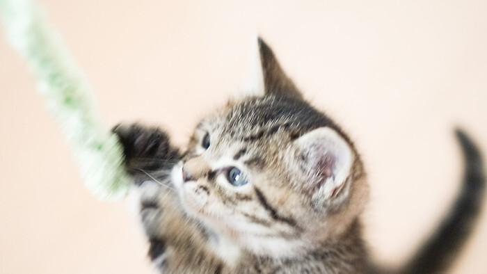 我が家の猫ちゃんはどれがお好み?愛猫家のための「猫じゃらし」カタログ